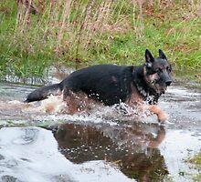 Water dog by JUDI2008