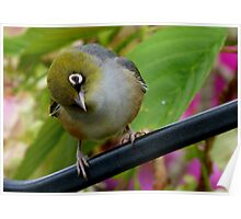 That's Extraordinary! - Silvereye - NZ Poster