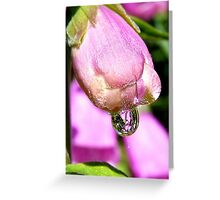 Look Into My Crystal Drop - Foxglove - NZ Greeting Card
