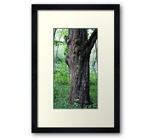 HDR Composite - An Old Maple Trunk Framed Print