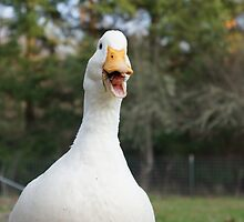 Daisy the Duck Loves to Talk by DuckDuckDog