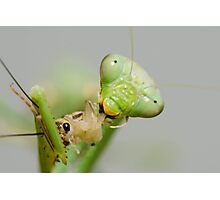 Hungry Mantis Photographic Print