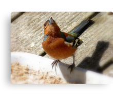 The Sky Is The Limit! - Chaffinch - NZ Canvas Print