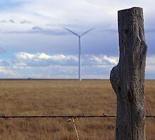 Texas Windmills by Pamela Maxwell