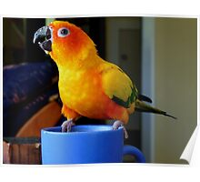 It Doesn't Get Much Better Than This! - Sun Conure Poster