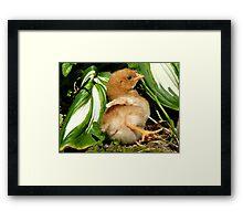 The Leaf Sun Lounger - Chick - NZ Framed Print