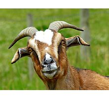 Nanny Reporting For Duty! - Goat - NZ Photographic Print