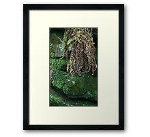 HDR Composite - Dead Ferns Hang Down Framed Print