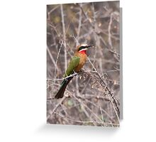 White-fronted Bee-Eater, Kruger National Park, South Africa Greeting Card