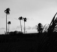 hurricane by Paola  Massa