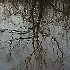 Reflection of a tree by Leo Sapene