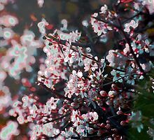 Blossom by Michelle Dry