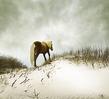 happy trails by jan lakey © Passionate Pixels