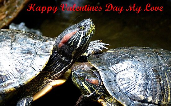 Happy Valentines Day My Love - Turtles NZ by AndreaEL