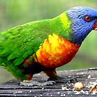 I'm Nuts About Nuts! - Rainbow Lorikeet - Maple Glen NZ by AndreaEL