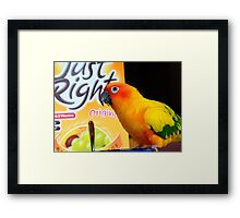 Did You Get It All This Morning! - Sun Conure - NZ Framed Print