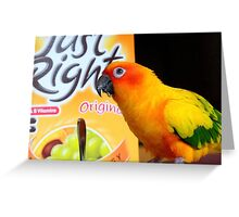 Did You Get It All This Morning! - Sun Conure - NZ Greeting Card