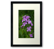 HDR Composite - Purple Flox or Phlox 2 Framed Print