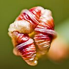 Unfolding flower by Marylou Badeaux