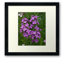 HDR Composite - Purple Phlox Flox Name Something Something Framed Print