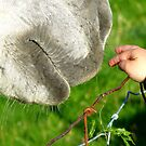 Have No Fear I'll Be Gentle! - Child & Horse - NZ by AndreaEL