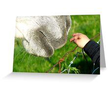 Have No Fear I'll Be Gentle! - Child & Horse - NZ Greeting Card