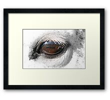 Reflection In A Golden Eye - Horse - VZ Framed Print