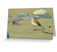 Hey, I'll Pose! - Pipit - New Zealand Greeting Card