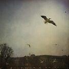 Fly away by Laurent Hunziker
