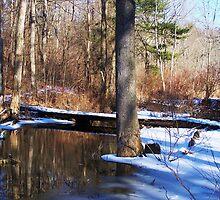 Trail Bridge by RLHall