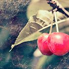 A pair of cherries by Linda Lees