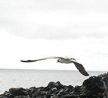 Smooth Takeoff by petergallivan