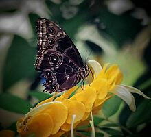 Yellow Discovery by DIANE KLEVECKA