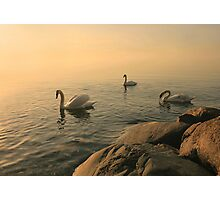 A Trio Of Swans At Sunrise Photographic Print