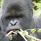 Gorilla Snack by Steve Bulford