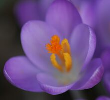 im dainty but beautiful by Christopher  Ewing