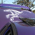 horse on the back of a car by ebonyjane