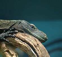 Lizard at Rest by sarrobi