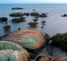 Bonsai Mangroves by Ern Mainka