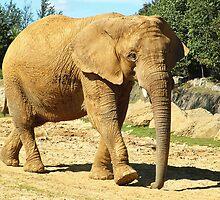 Elephant Walk by BizziLizzy