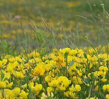 Fields of yellow by Mark  O'Mahony