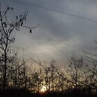 sunset2 by wespenspinne