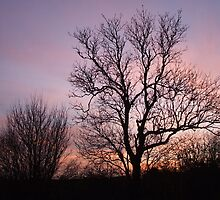 tree with purple sky by wespenspinne