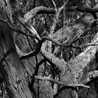 Scary Tree- Wotton Scrub by Ben Loveday
