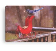 Winter Blue Jay #1 Canvas Print