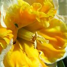 Frilly Daffs by Mary  Lane