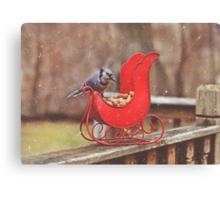 Winter Blue Jay #3 Canvas Print