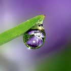 Flower Refraction in Rain Drop by Debbie Sickler