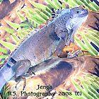 Janga The Great Green Iguana by Sade
