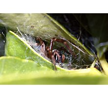 Spider's lair Photographic Print